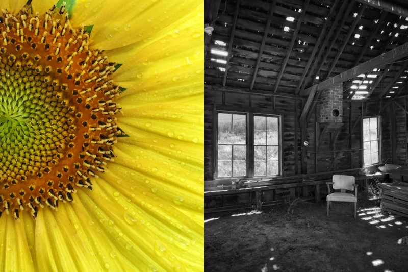 Closeup of a yellow flower on left. At right, an abandoned building in black and white