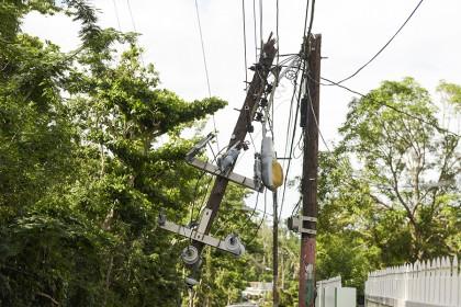 Trees surround broken telephone pole