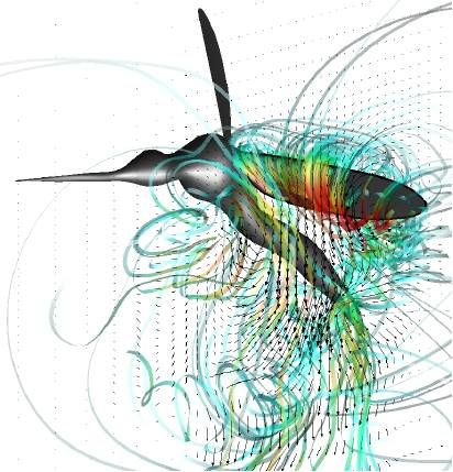 Complex flow streamlines generated by the flapping wing of a mosquito in flght.