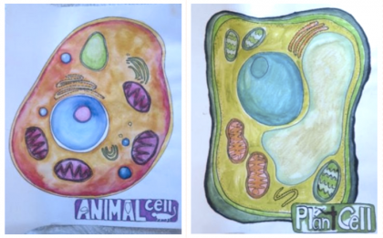 Images of plant and animal cells drawn by students