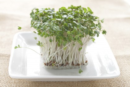 Chemical In Broccoli Sprouts May Treat >> Chemical Derived From Broccoli Sprouts Shows Promise In
