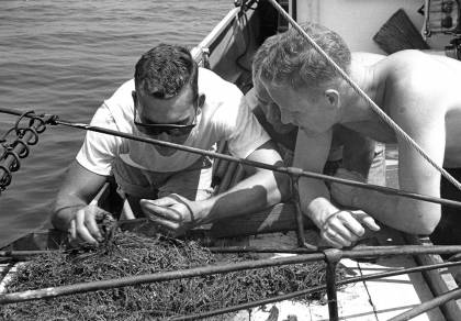 Aboard the Maury on the bay, scientists look through seaweed samples.