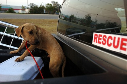 A dog is rescued in Louisiana