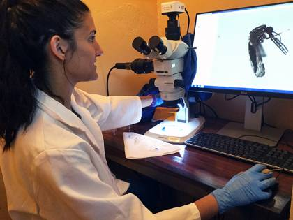 Jordan Hoffman examines a mosquito under a microscope