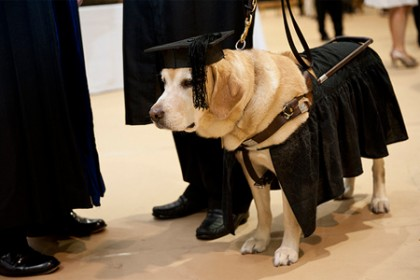 Service Dog Honorary Degree