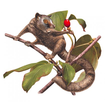 An illustration of Carpolestes simpsoni on a tree branch