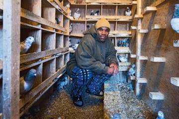 A man in a pigeon coop