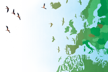 Illustration depicts a political map of Europe with the coastline disintegrating to become birds in flight across the Atlantic