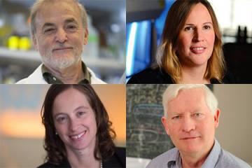 Johns Hopkins AAAS fellows Stephen Baylin, Sharon Gerecht, Timothy Heckman, and Elizabeth Stuart