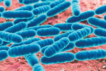 Bacterial Microbes