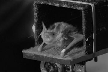 Still of a bat in a box