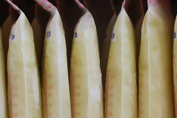 Bags of breastmilk lined up in a refrigerator