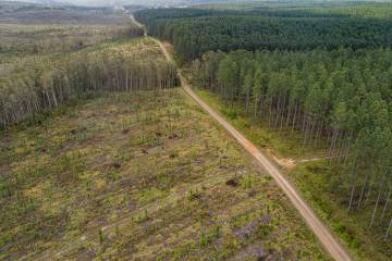 Photo shows a region of forest that had been cleared