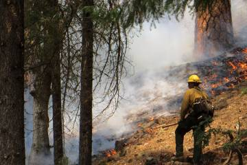 A fire fighter battles a forest fire