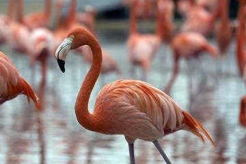 From The Hub: Flamingos, elephants, and sharks: How do blind adults learn about animal appearance?