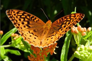 An orange butterfly sits on a flower in a garden