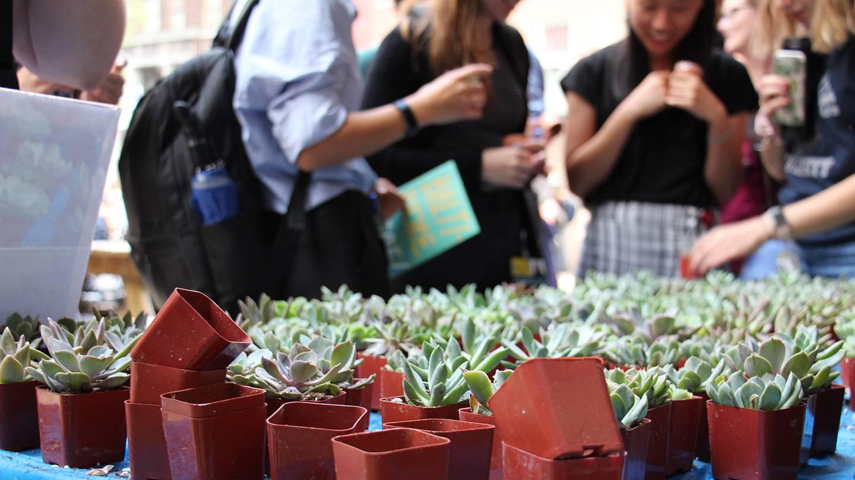 Students choose succulent plants