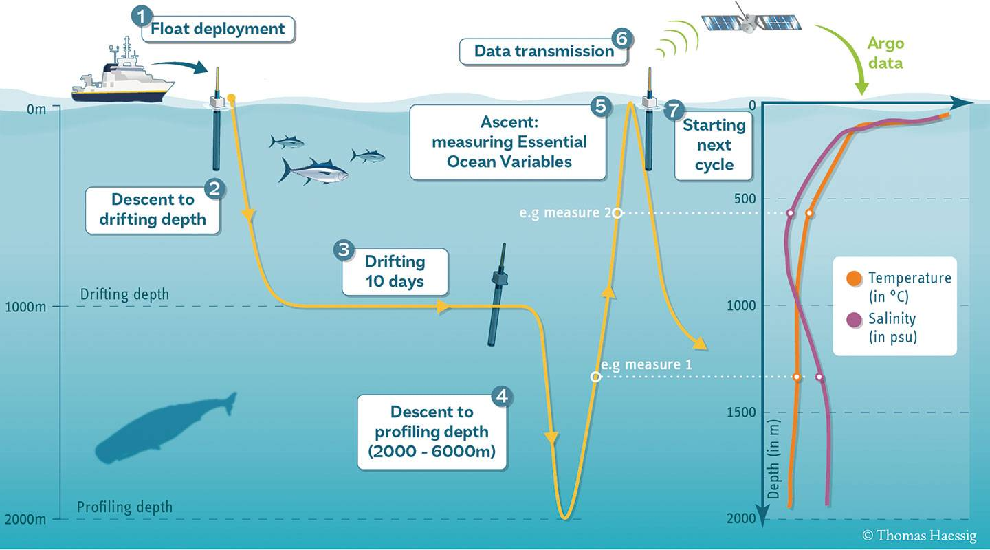 An inforgraphic depicts the process of deploying an Argo float. Steps: Float deployment. Descent to drifting depth. Drifting 10 days. Step 4: Descent to profiling depth (2000-6000 meters). Ascent: Measuring essential ocean variables. Data transmission.