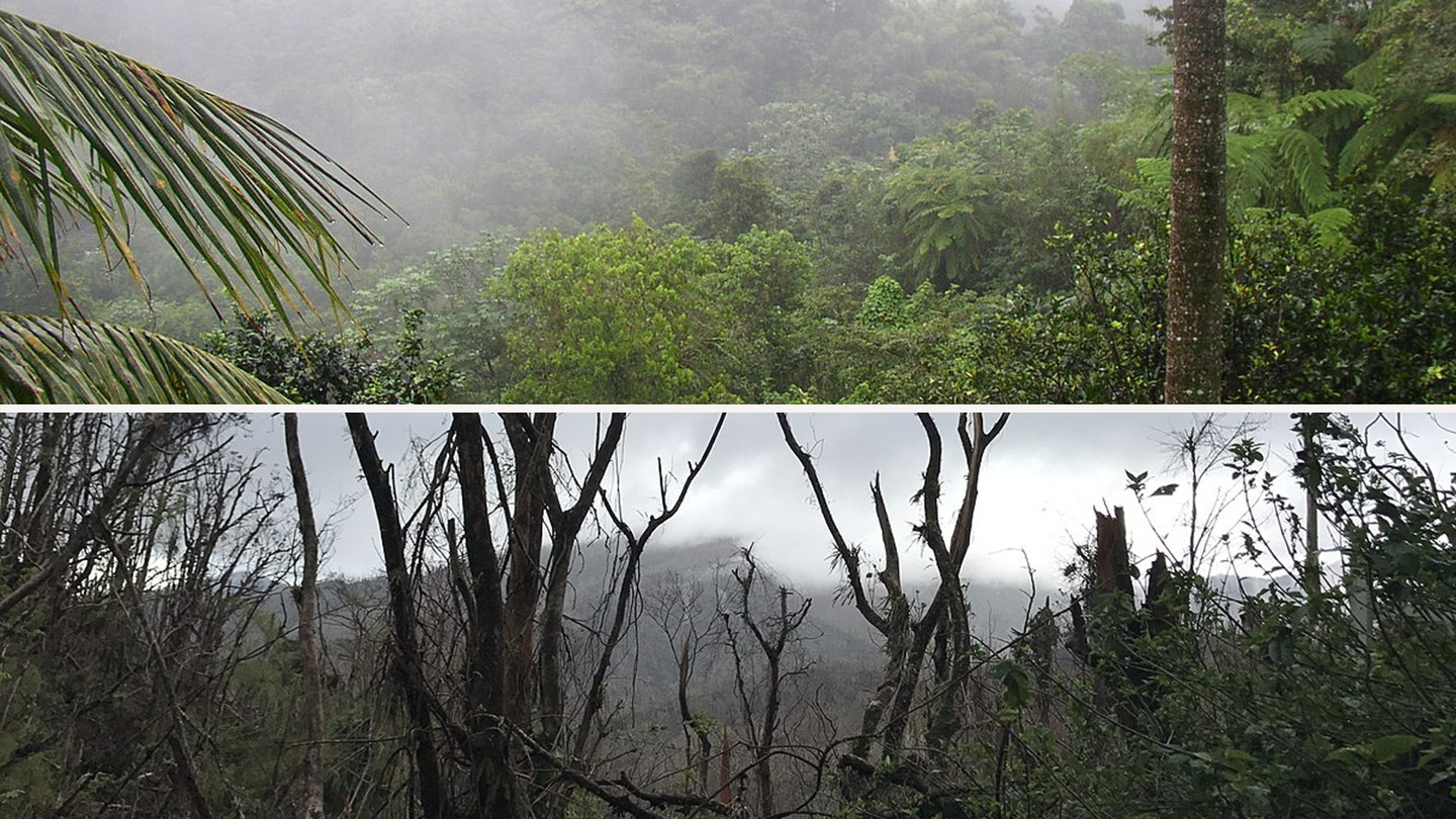 Top: A thriving rainforest; bottom: Broken trees and leafless treetops