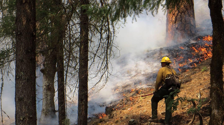 A fire fighter battles a forest fire