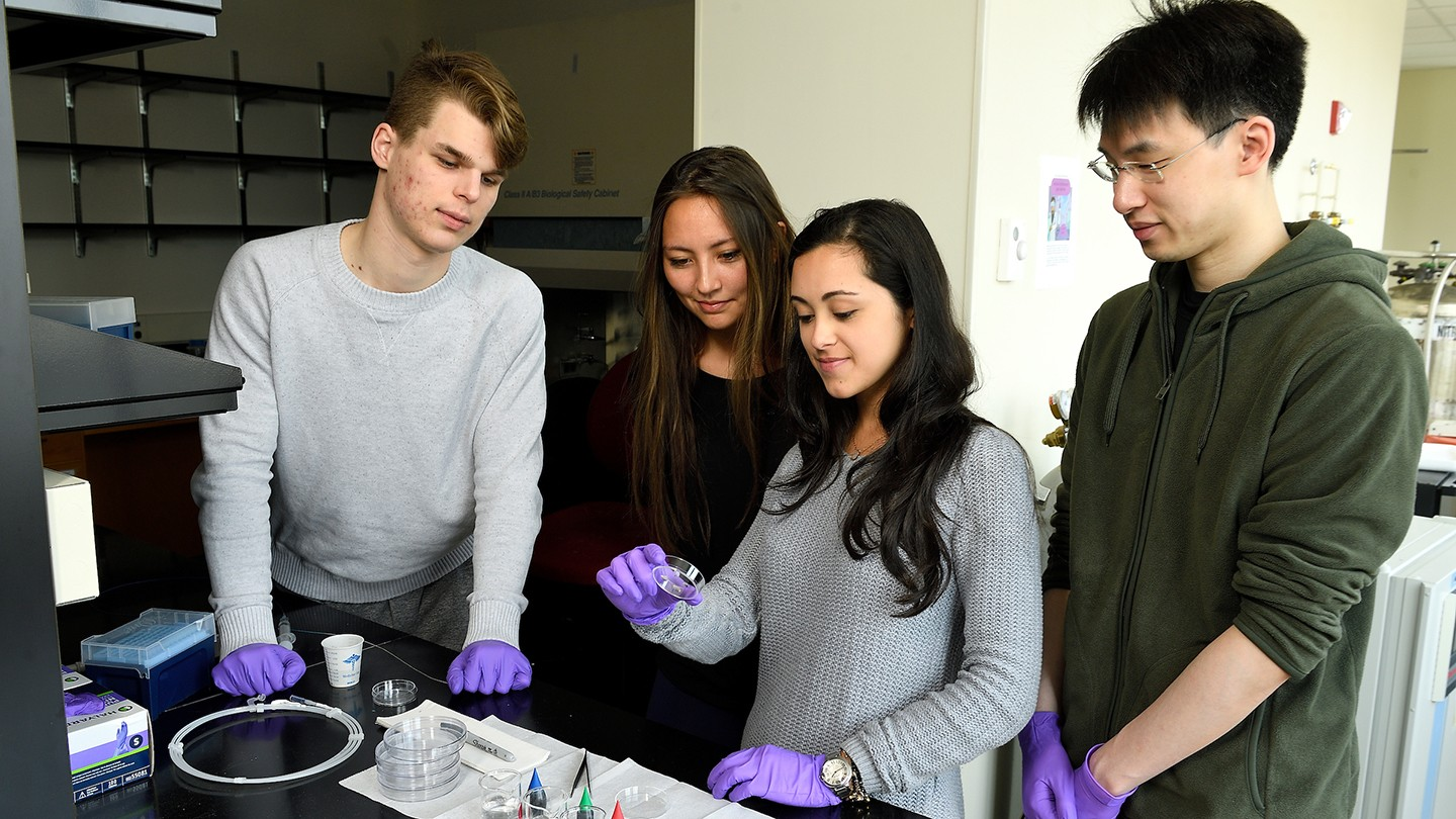 Four students gather around a petri dish