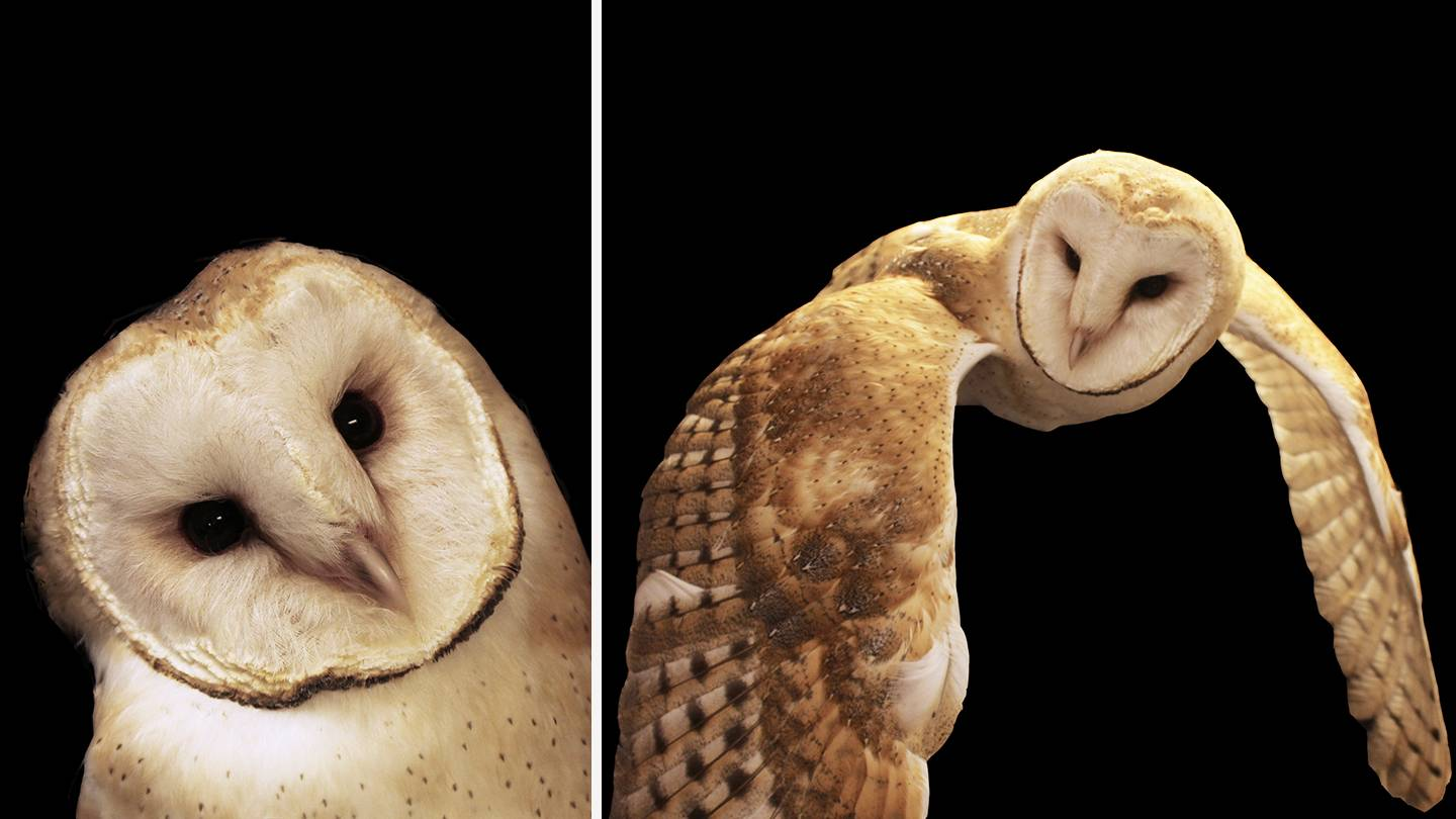 Composite image of owls