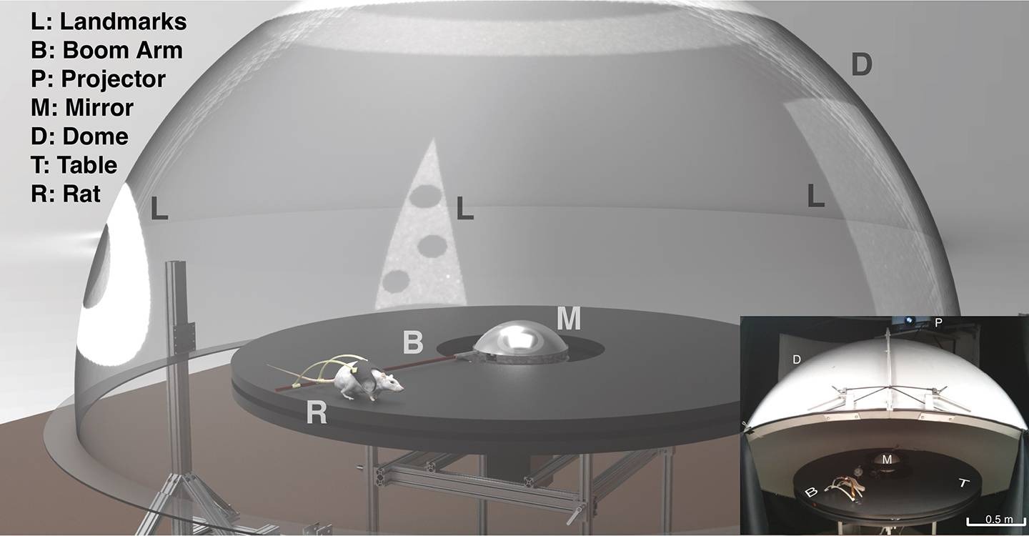 Graphic of experiment
