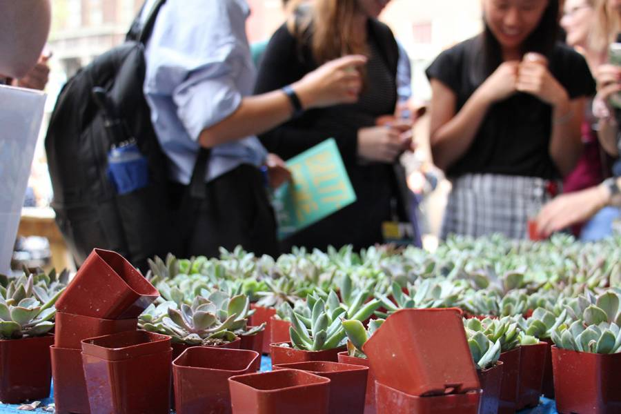 Students choose succulent plants