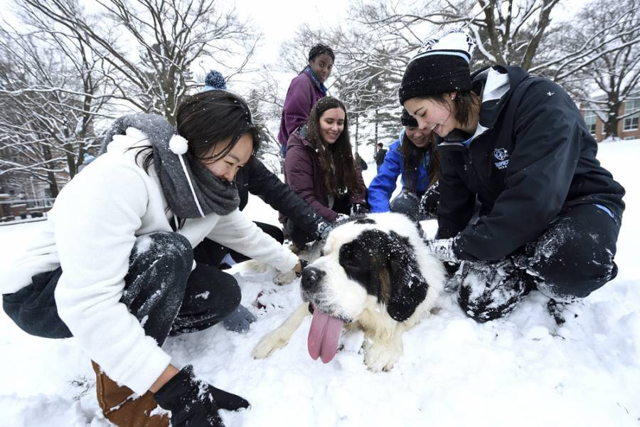 Students pet a large dog in the snow