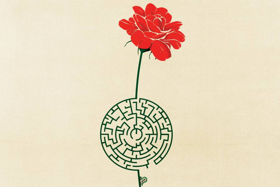 A red rose with a stem that appears to be a maze