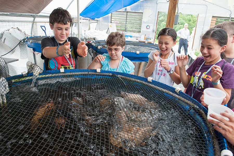 Children gather around a pool of fish in the Food System Lab