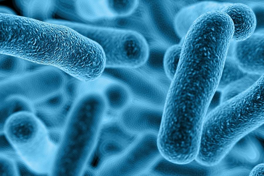 johns hopkins researchers find link between oral bacteria and cancer risk hub. Black Bedroom Furniture Sets. Home Design Ideas
