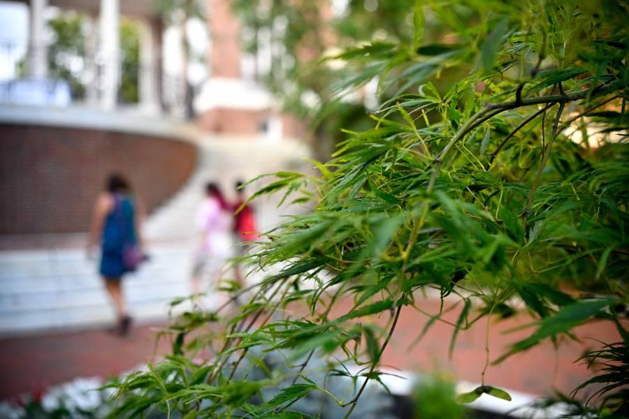 Leaves on Johns Hopkins Homewood campus