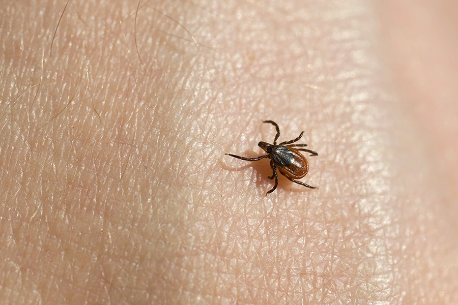 Severe, lingering symptoms seen in some patients after Lyme disease