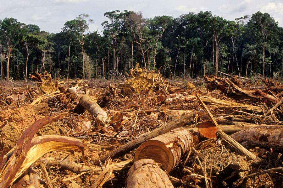 Stumps and debris in a felled forest