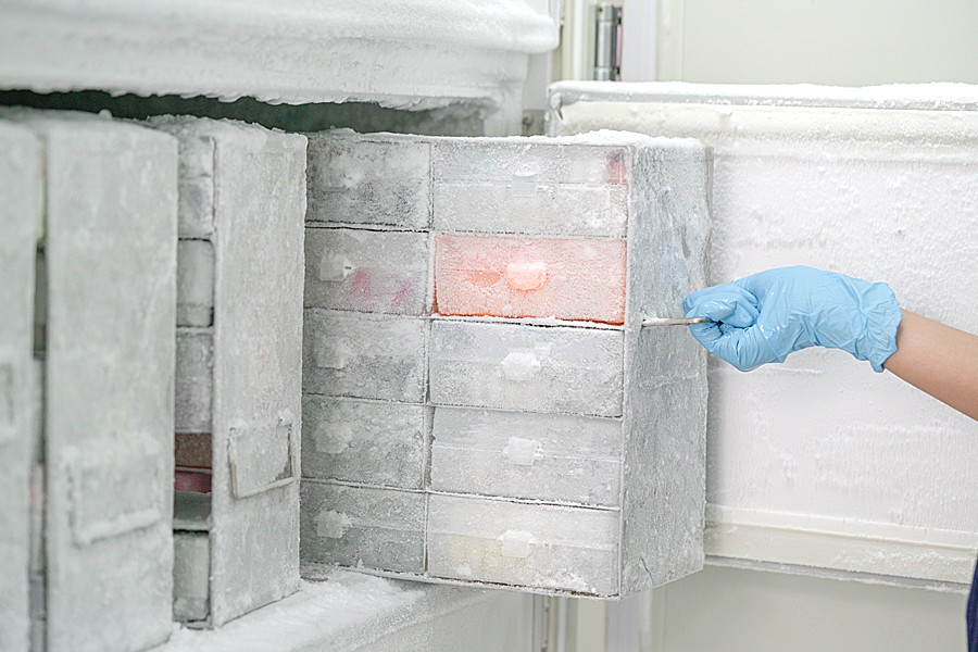 A gloved hand pulls containers of isolated pathogens from a laboratory freezer.