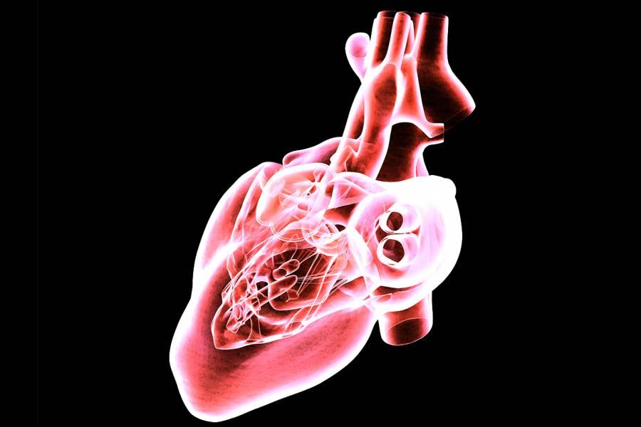 Heart model