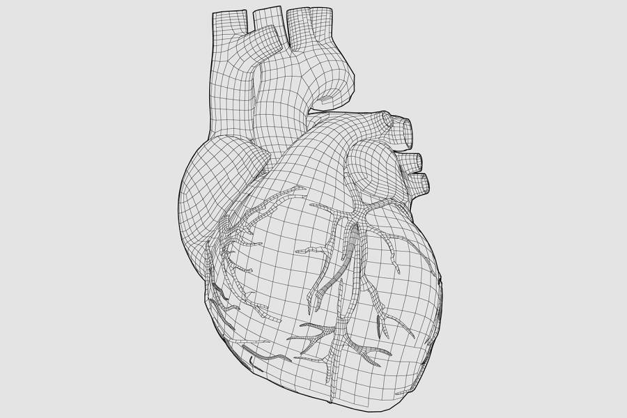 Illustration of a heart and blood vessels