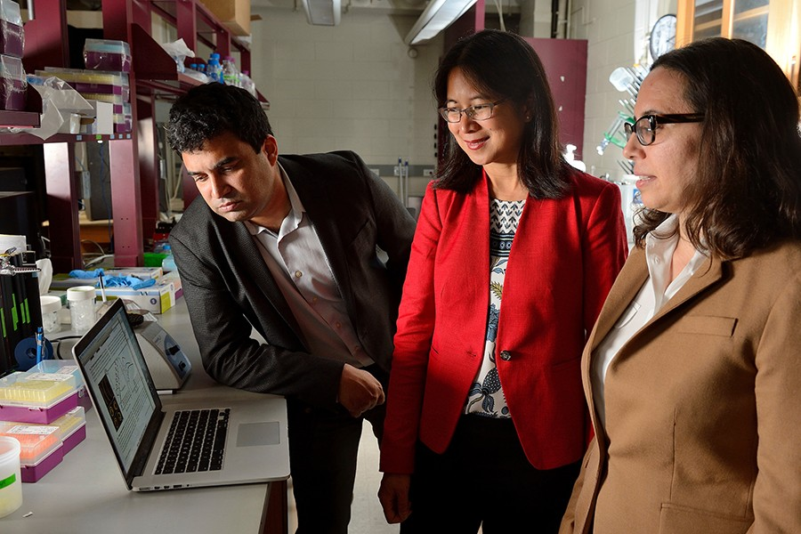 David Gracias, Vicky Nguyen, and Rebecca Schulman examine results on a computer screen