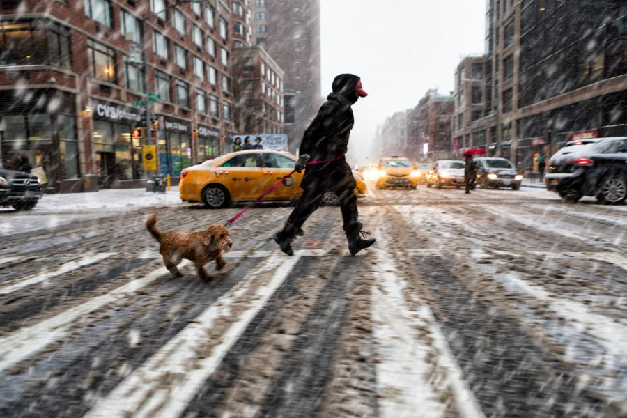 A person walks a dog in a city in freezing rain
