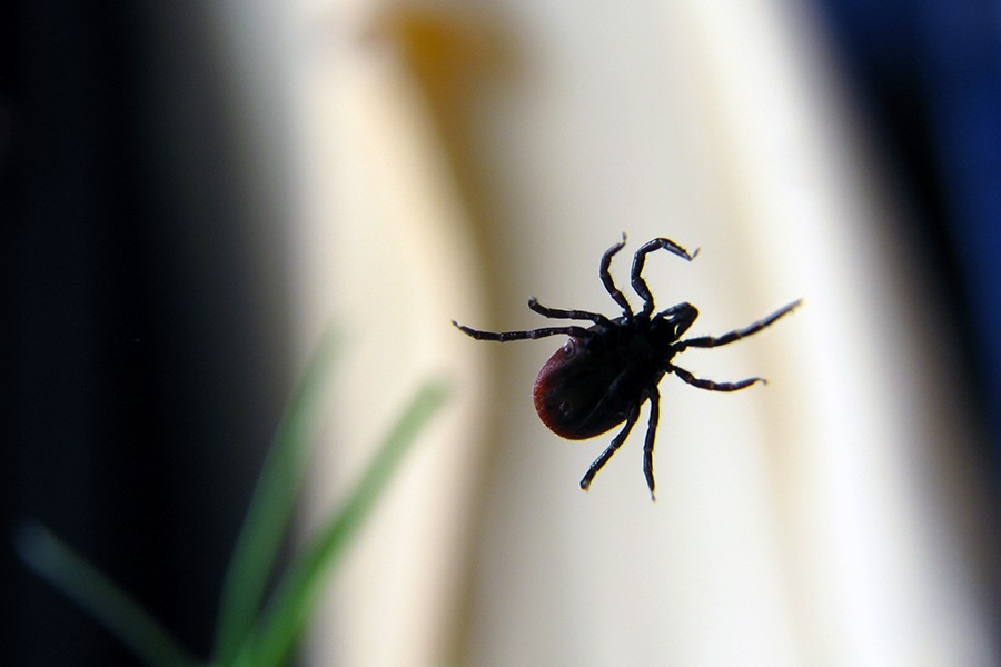 Severe, lingering symptoms seen in some patients after Lyme