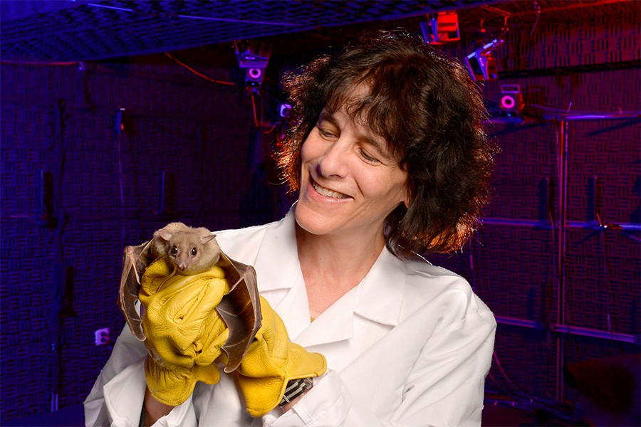 Cynthia Moss, wearing yellow gloves, holds a small bat with its wings outstretched
