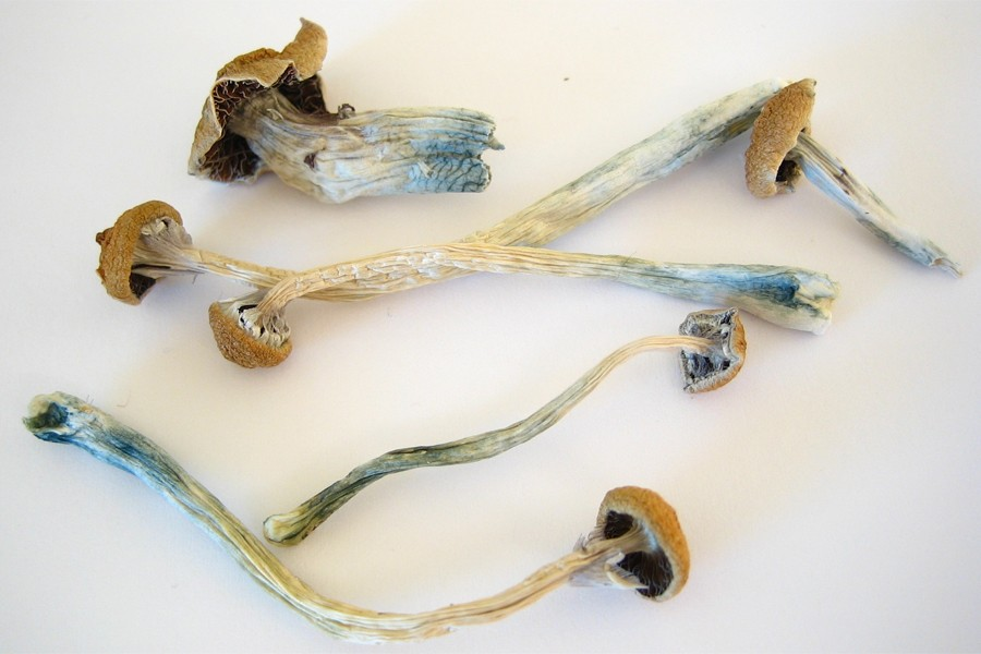 Dried psychedelic mushrooms