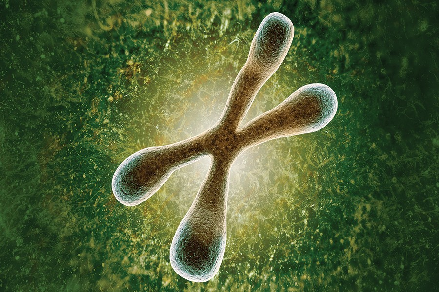 Telomeres are the caps, here in green, on the ends of chromosomes.