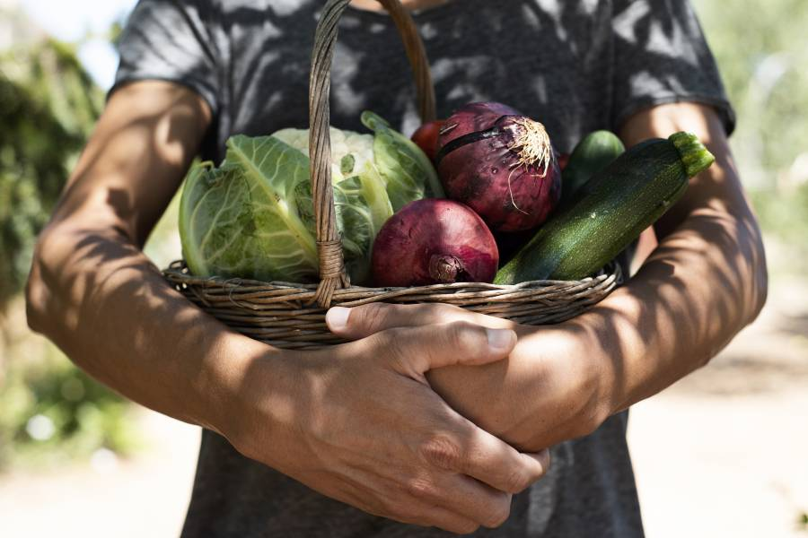 A person holds a basket of garden produce
