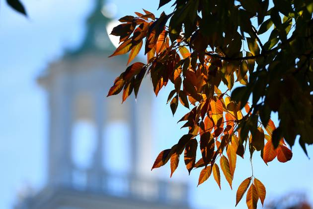 Leaves in front of Gilman Hall tower